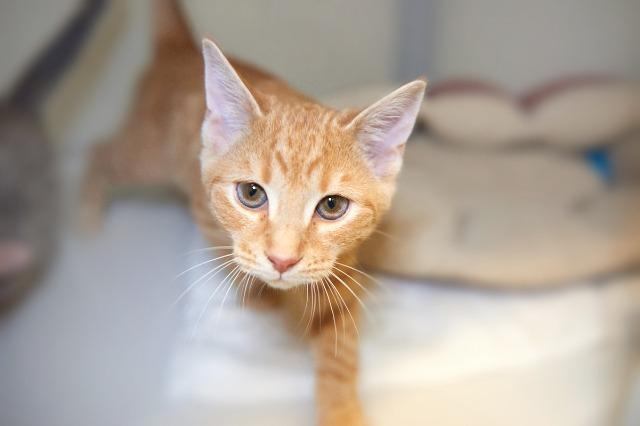 My name is Vigo and I am ready for adoption. Learn more about me!