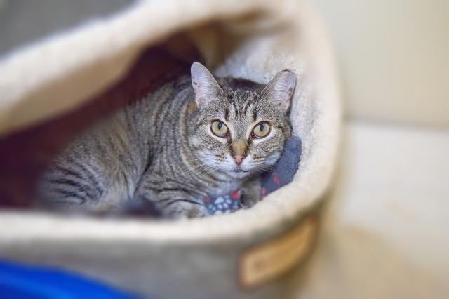 My name at SAFE Haven was Grace and I was adopted!