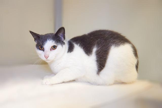My name is Fredrick and I am ready for adoption. Learn more about me!