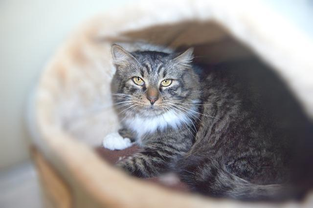 My name at SAFE Haven was Pippin and I was adopted!