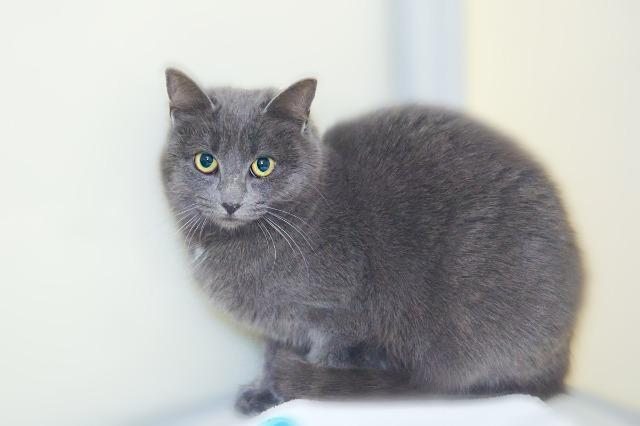 My name at SAFE Haven was Eloise and I was adopted!