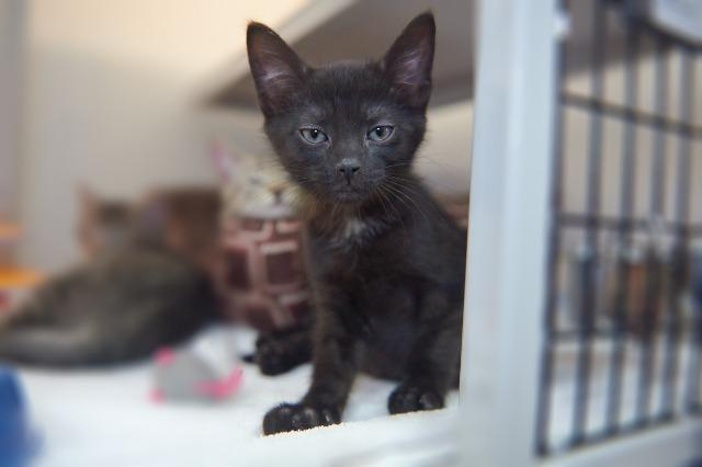 My name is Prism and I am ready for adoption. Learn more about me!