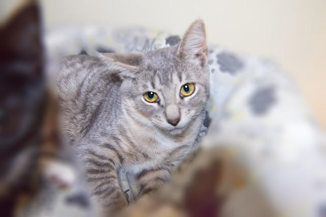 My name at SAFE Haven was Etna and I was adopted!