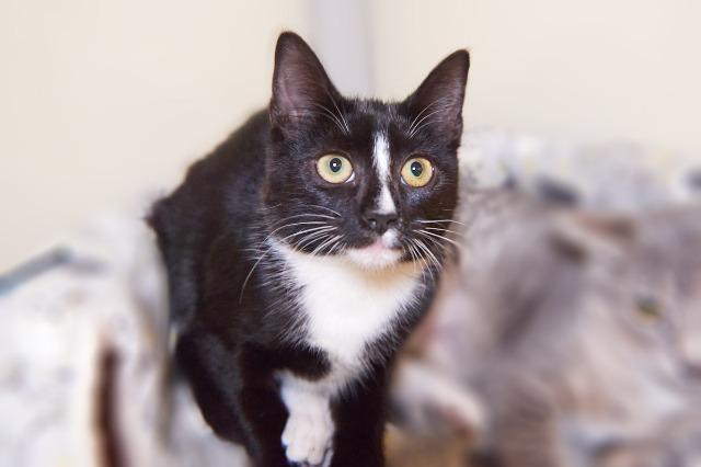 My name at SAFE Haven was Annapurna and I was adopted!