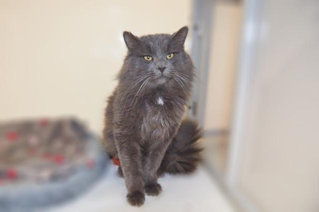 My name at SAFE Haven was Andes and I was adopted!
