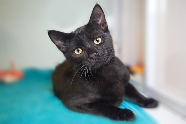 My name at SAFE Haven was Edgar and I was adopted!