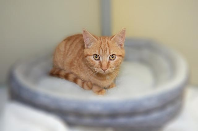 My name at SAFE Haven was Charming Chaz and I was adopted!