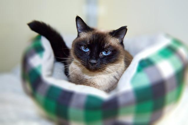 My name at SAFE Haven was Luana and I was adopted!
