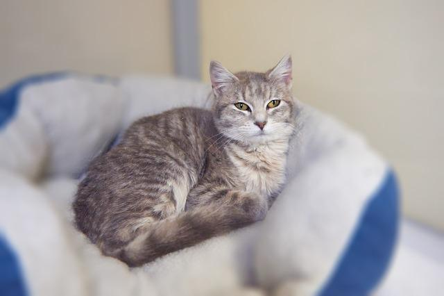 My name at SAFE Haven was Twinkles and I was adopted!