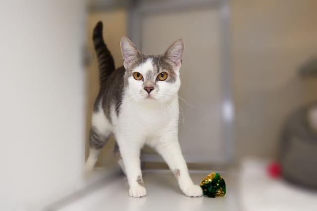 My name is Sparkly and I am ready for adoption. Learn more about me!