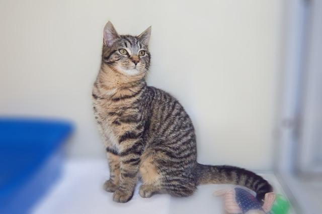 My name at SAFE Haven was Barney and I was adopted!