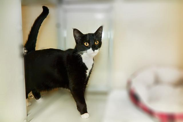 My name at SAFE Haven was Joanne and I was adopted!