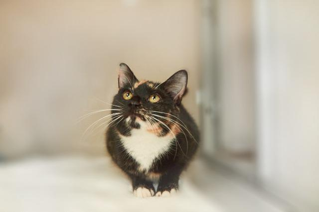 My name at SAFE Haven was Amellia and I was adopted!