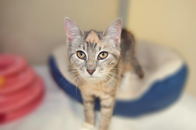 My name at SAFE Haven was Delia and I was adopted!