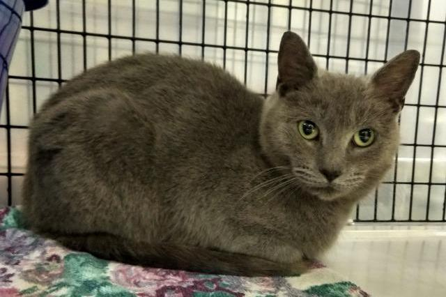 My name at SAFE Haven was Annora and I was adopted!