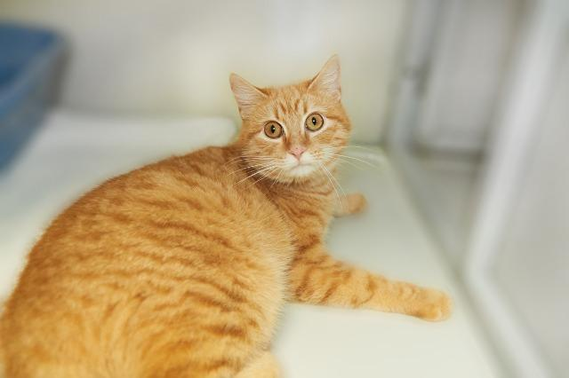 My name is Dave and I am ready for adoption. Learn more about me!