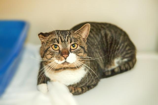 My name at SAFE Haven was Simon and I was adopted!