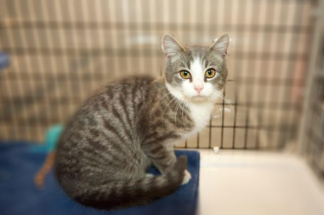My name at SAFE Haven was Gatsby and I was adopted!