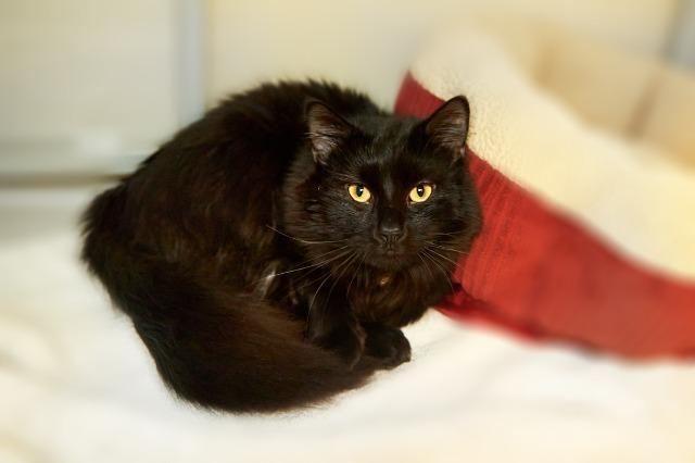 My name is Tucker and I am ready for adoption. Learn more about me!