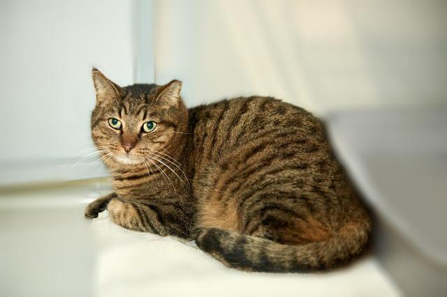 My name at SAFE Haven was Fletcher and I was adopted!