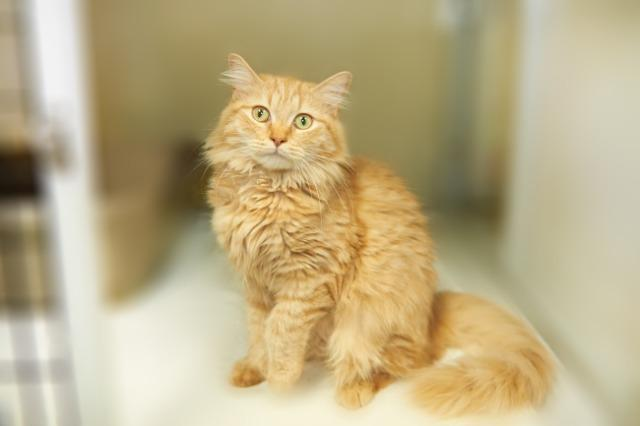 My name at SAFE Haven was Jennifurr and I was adopted!