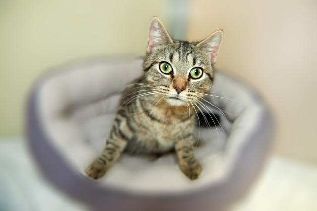 My name at SAFE Haven was Tabbytha and I was adopted!