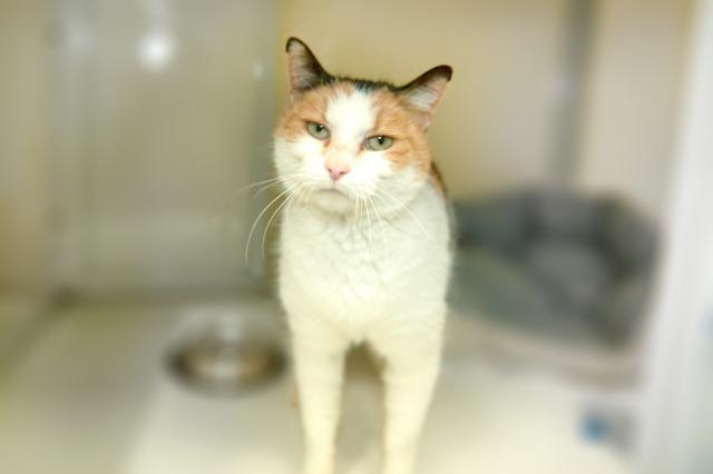 My name at SAFE Haven was Veronicat and I was adopted!