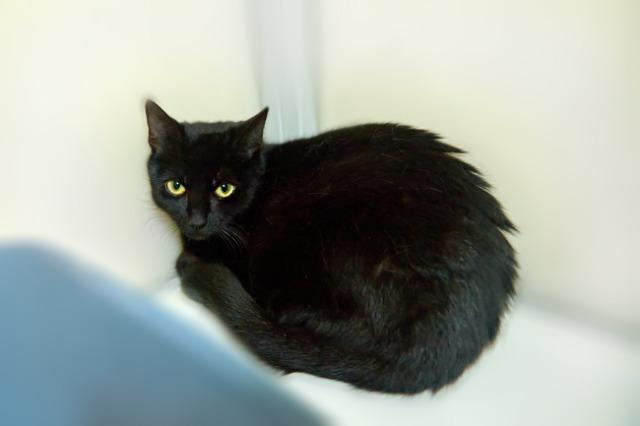 My name at SAFE Haven was Buffie and I was adopted!