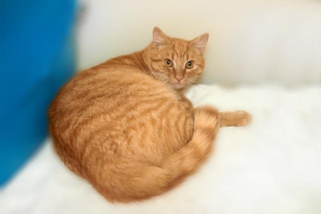 My name is Blayne and I am ready for adoption. Learn more about me!