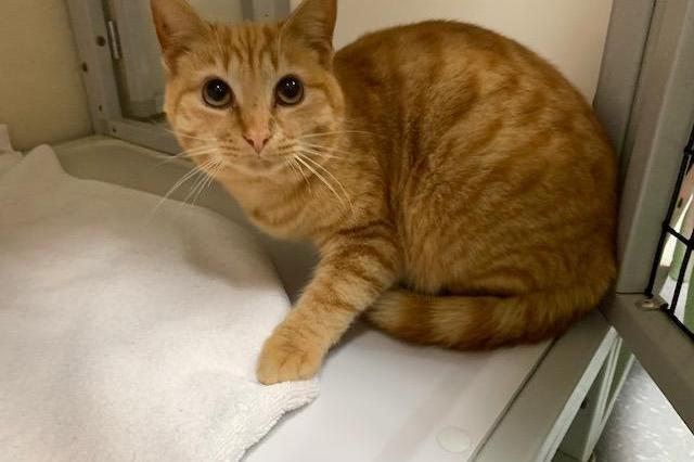 My name at SAFE Haven was David Meowie and I was adopted!
