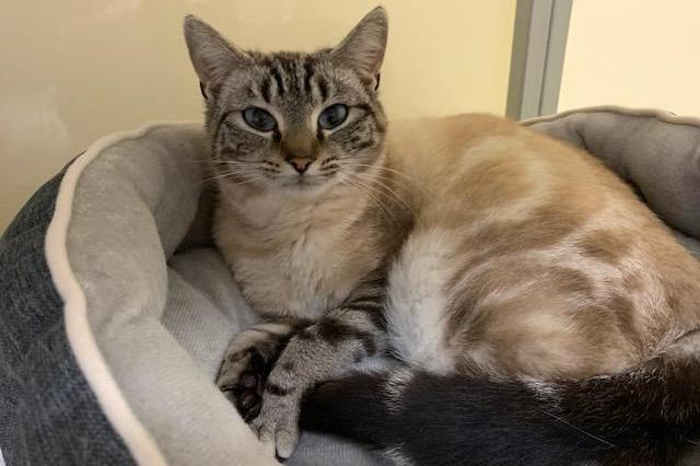 My name at SAFE Haven was Halley Purry and I was adopted!