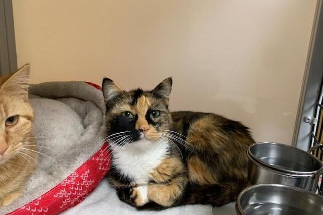 My name is Zina and I am ready for adoption. Learn more about me!