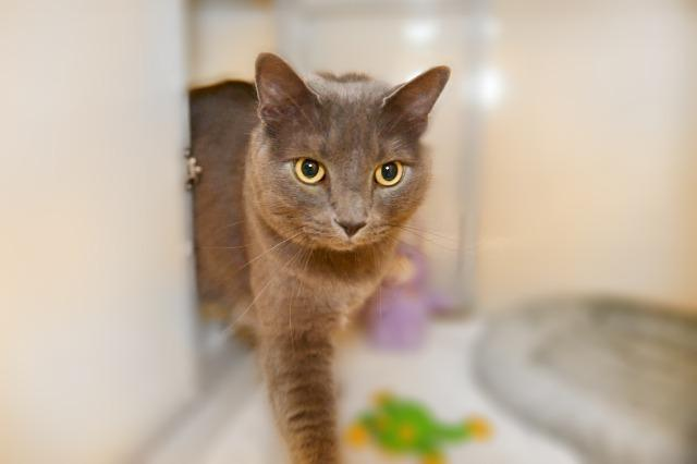 My name at SAFE Haven was Nokie and I was adopted!