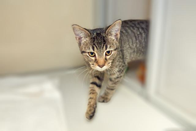 My name at SAFE Haven was Houdini and I was adopted!