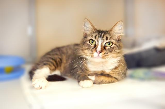 My name is Miku and I am ready for adoption. Learn more about me!