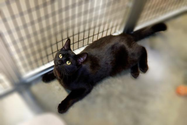 My name at SAFE Haven was Fuzz Aldrin and I was adopted!