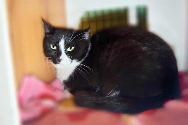 My name is Rita Ville and I am ready for adoption. Learn more about me!