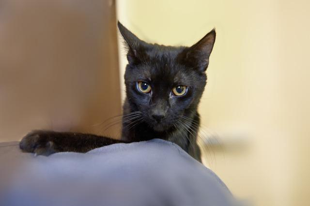 My name at SAFE Haven was Mayer and I was adopted!