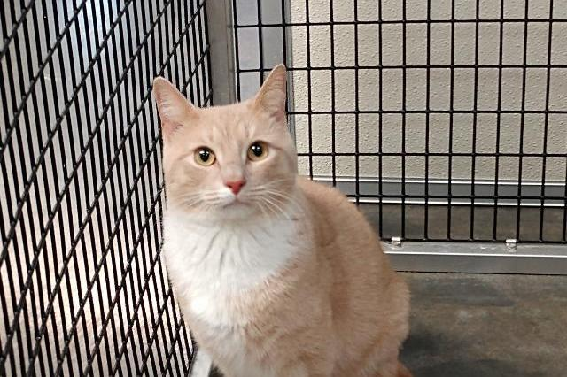 My name at SAFE Haven was Conway Kitty and I was adopted!