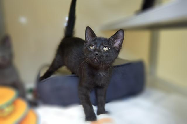 My name at SAFE Haven was Heinz and I was adopted!