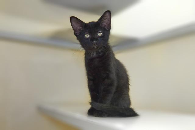 My name at SAFE Haven was Relish and I was adopted!