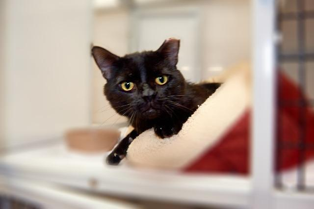 My name is Devereaux and I am ready for adoption. Learn more about me!