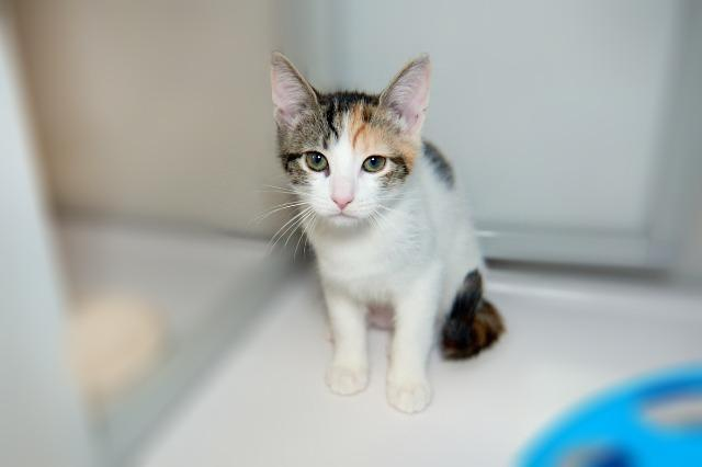 My name at SAFE Haven was Peachpuff and I was adopted!