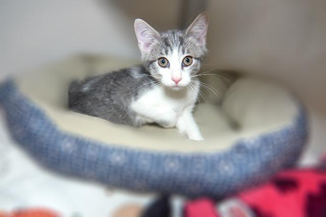 My name at SAFE Haven was Silver Cloud and I was adopted!