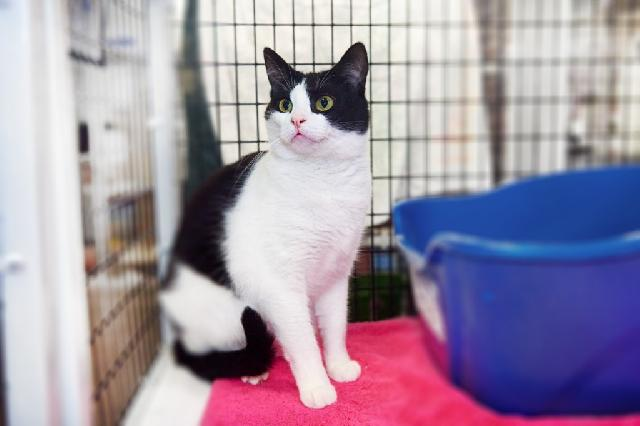 My name is Leslie and I am ready for adoption. Learn more about me!