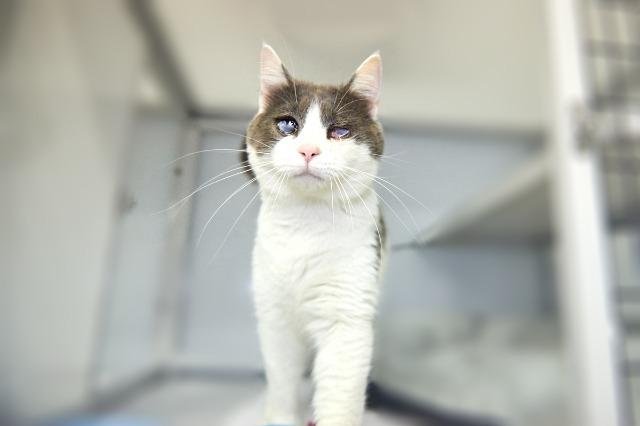 My name is Tilda and I am ready for adoption. Learn more about me!