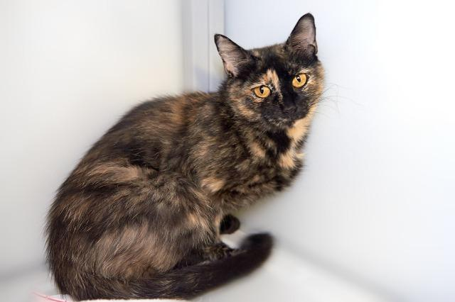 My name is Raquel and I am ready for adoption. Learn more about me!