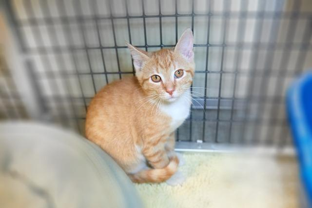 My name at SAFE Haven was Edwyn and I was adopted!