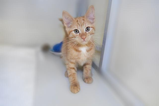 My name is Humphrey and I am ready for adoption. Learn more about me!