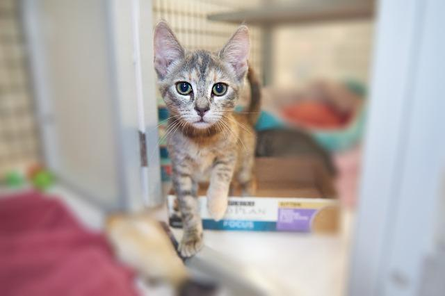 My name at SAFE Haven was Allie and I was adopted!